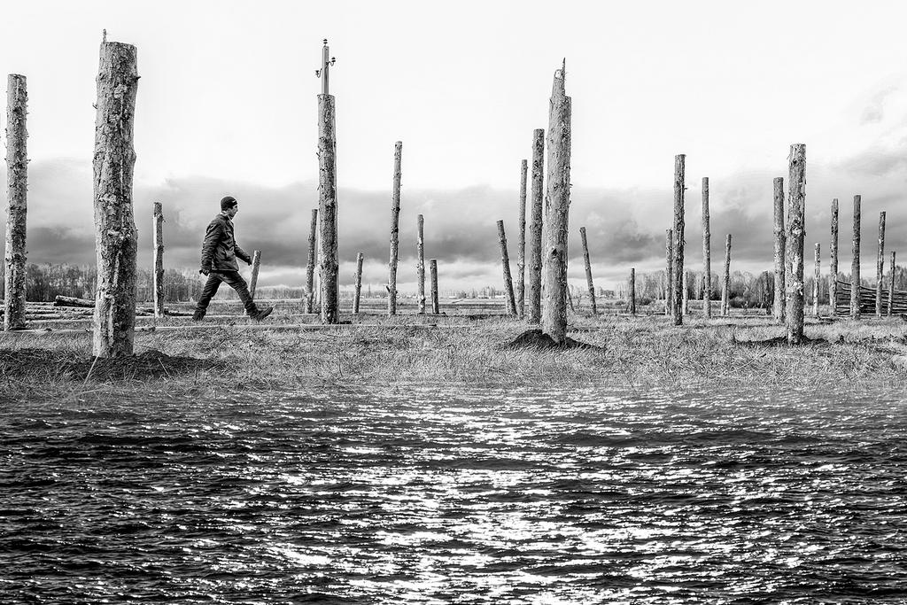 Красота и уязвимость природы: Мельников Владимир— из серии» Жизнь деревьев»